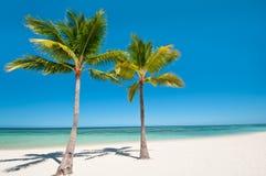 Palme e spiaggia sull'isola tropicale Fotografie Stock Libere da Diritti