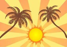 Palme e Sun Fotografie Stock Libere da Diritti