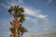Palme e un cielo nuvoloso Immagini Stock Libere da Diritti