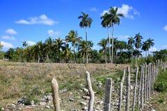 Palme e un recintare Cuba rurale Immagine Stock Libera da Diritti