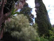 Palme e vegetazione in Grecia Immagini Stock Libere da Diritti