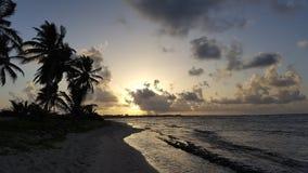 Palme ed oceano Fotografia Stock Libera da Diritti