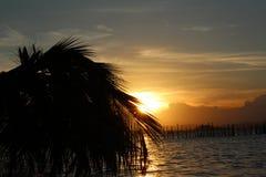 Palme in einem Sonnenuntergang Lizenzfreies Stockfoto