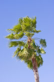 Palme an einem windigen sonnigen Tag Stockbilder