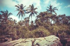 Palme filtrate annata sulla linea costiera Bello paesaggio nel clima tropicale Boschetto di legno a tempo soleggiato Fotografia Stock Libera da Diritti