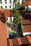 Palme fra i tetti rossi Fotografia Stock