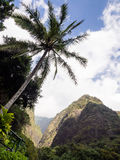 Palme gegen den Himmel stockfoto