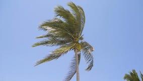 Palme gegen den Himmel 4K stock video footage