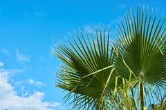 Palme gegen einen blauen bewölkten Himmel im Tageslicht lizenzfreie stockfotografie