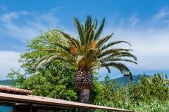 Palme gegen einen blauen Himmel Lizenzfreies Stockbild