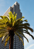 Palme gegen Himmelschaber Stockbild