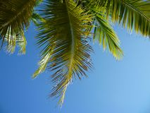 Palme giamaicane, Lucea immagine stock