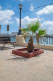 Palme in Gzira, Malta Stockbilder