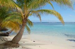 Palme hängt über Aqua Water Shoreline in Belize Stockfoto