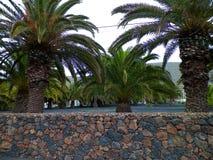 Palme in Haria, Lanzarote, isole Canarie fotografie stock