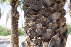 Palme herein in der archäologischen Fundstätte von Beit She u. von x27; Israel Palest Stockfotos