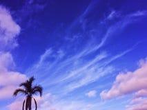 Palme-Himmelwolke Stockbild