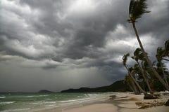 Palme am Hurrikan stockfotos