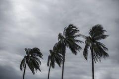Palme am Hurrikan lizenzfreie stockbilder