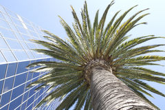 Palme im Finanzbezirk Stockbilder