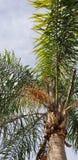 Palme im Himmel stockfotos