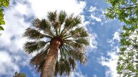 Palme im Himmel stock footage