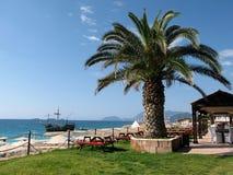 Palme im Kaffee auf dem Strand Lizenzfreies Stockbild