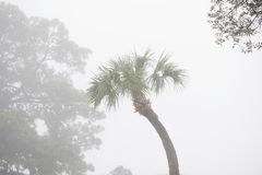 Palme im Nebel lizenzfreie stockbilder