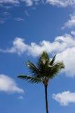 Palme im Sonnenschein Stockfoto