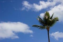 Palme im Sonnenschein Stockbilder