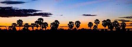 Palme im Sonnenuntergang Lizenzfreies Stockbild
