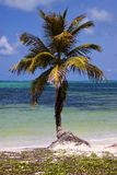 Palme im Wind in der blauen Lagune Stockbild
