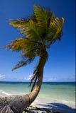 Palme im Wind in der blauen Lagune Mexiko Stockfotografie