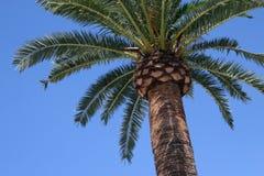 Palme lokalisiert lizenzfreies stockfoto