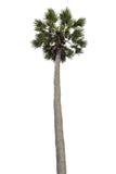 Palme lokalisiert Stockfoto