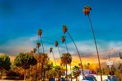 Palme a Los Angeles al tramonto fotografia stock