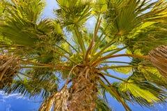 Palme, Mallorca Stockfotografie