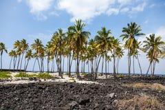 Palme in mezzo di Lava Field Fotografia Stock Libera da Diritti