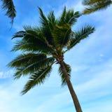 Palme mit dem Wellenartig bewegen in den blauen Himmel Stockfotos