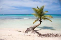 Palme mit einem langen Stamm, der über der Küste des karibischen Meeres hängt Herum Ruhe, Frieden und Paradise Hell, Meer lizenzfreie stockfotografie