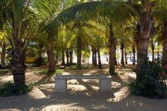 Palme mit entspannendem Sitz in Acapulco, Mexiko Lizenzfreie Stockfotos