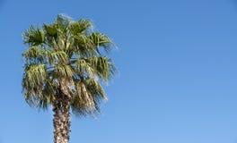 Palme mit Hintergrund des blauen Himmels stockbild