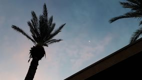 Palme, Mond, Himmel lizenzfreie stockfotografie