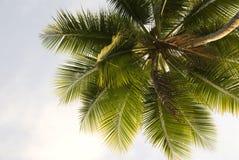 Palme-Nahaufnahme Lizenzfreie Stockfotos