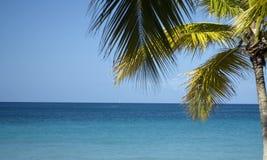 Palme nahe dem Ozean Lizenzfreies Stockfoto