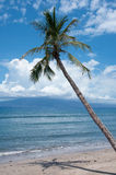 Palme nahe der Ozeanküste lizenzfreie stockfotos