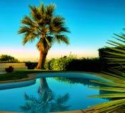 Palme nahe einem kleinen Schwimmen poo stockfotos