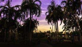 Palme nel giardino Fotografie Stock