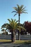 Palme nel Mediterraneo Immagini Stock