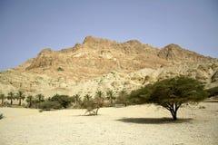 Palme nel paesaggio del deserto Fotografia Stock Libera da Diritti